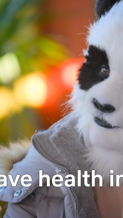 A Panda, From Netflix's 'Sexy Beasts', Is The Most Relatable Dating Show Contestant Ever